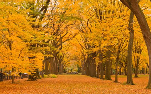 Sleepy Small Towns To Fall In Love With This Fall!