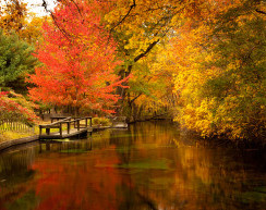 foliage on lake
