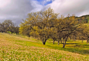Discount hotels and attractions in Morgan Hill, California