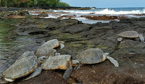 Discount hotels and attractions in Keaau, Hawaii