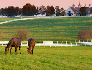 Discount hotels and attractions in Florence, Kentucky